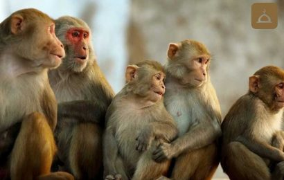 Beş Maymunun Hikayesi