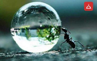 Su taşıyan karınca