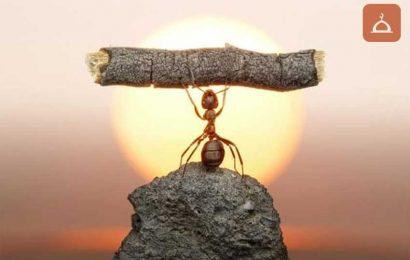 Karınca ile Hz. Süleyman(A.s.)